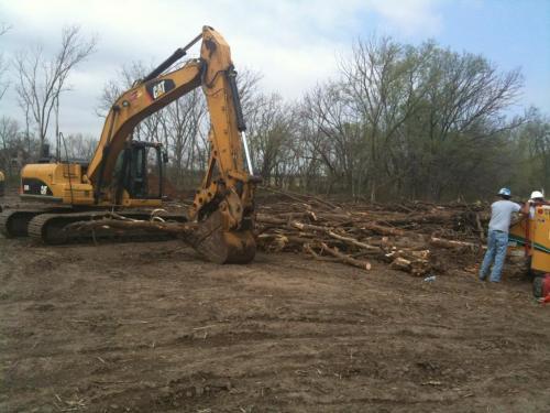 treeclearing 3