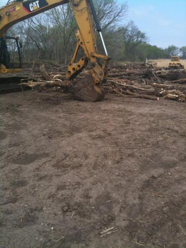 treeclearing 5