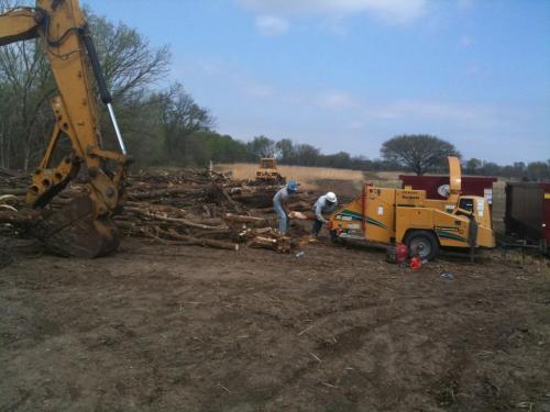 treeclearing 4